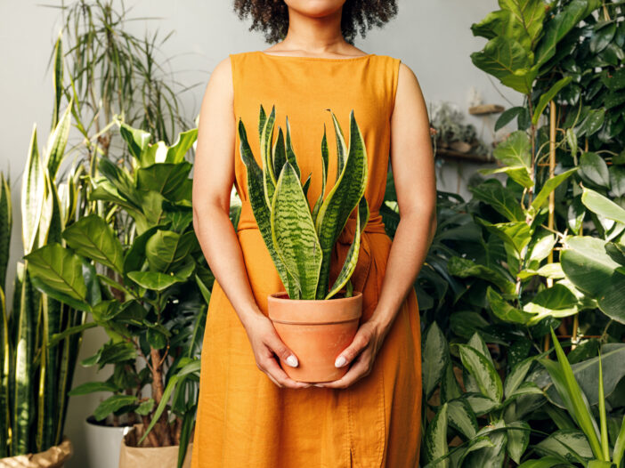 Image of woman holding plant.