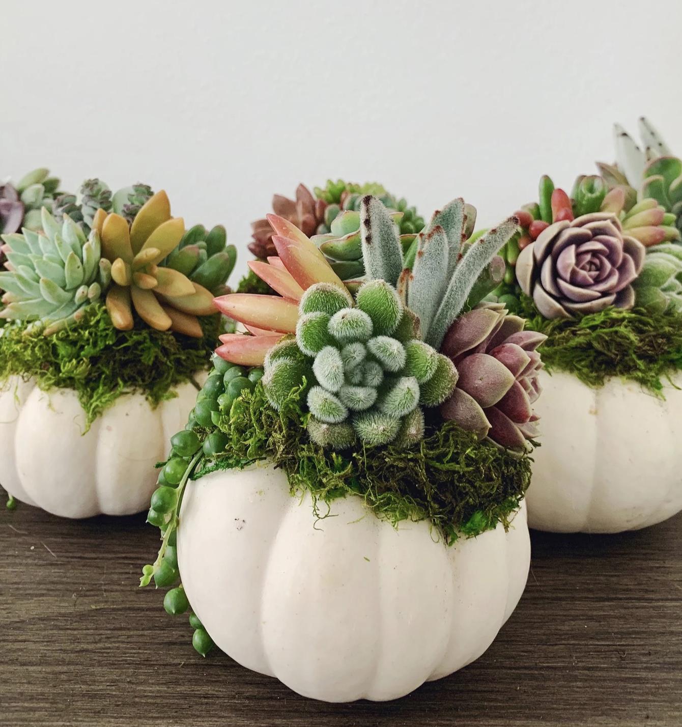 Succulent Pumpkin Centerpiece