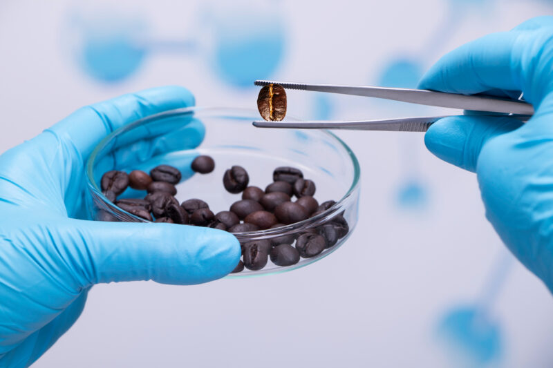 Image of coffee beans in lab