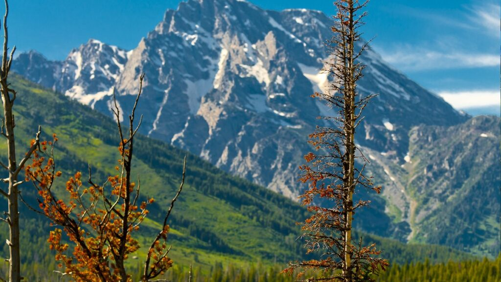A photo of some trees with a mountain in the background taken in Jackson Hole, Wyoming